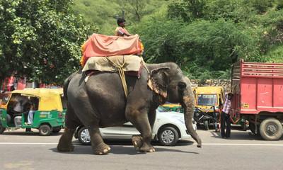 黑暗版小飛象!馬戲團大象被虐待12年「發瘋踩死訓練員」自由半小時…挨86槍慘死