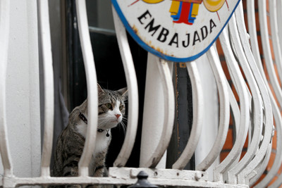 亞桑傑被捕 網友更擔心他的貓