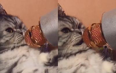 貓主子沉默10秒「4段式致詞」!