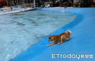 柴下水踩煞車 切換泳池模式ON!