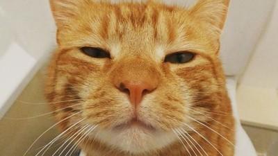 招牌「呆滯臉」坐擁兩萬粉!橘貓表情太人類 裡面的工讀生很不甘願