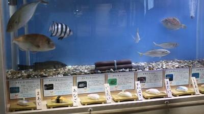 你死得好慘!名古屋港水族館「壽司料特展」,活體+屍體同台秀好秀滿