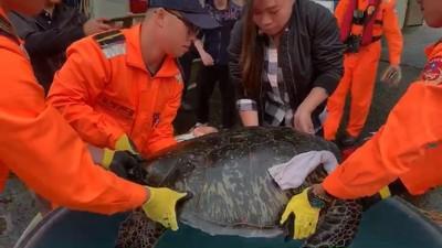 漁民救綠蠵龜 海巡成稱職海龜保母
