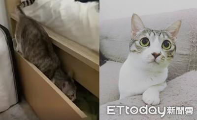 「多拉A貓」只睡床櫃 還會關門