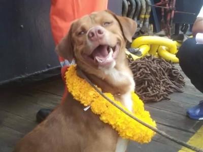 海上220公里奇幻漂流!幸運小狗重生露燦笑