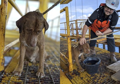 狗漂流220公里 奇蹟找到他獲救