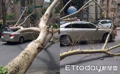即/路樹突倒下砸車!後擋風玻璃碎裂