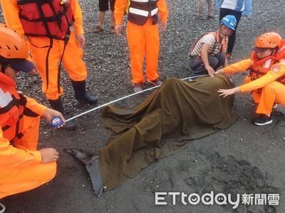 台東岸際鯨豚擱淺 濕布保濕搶救仍不治