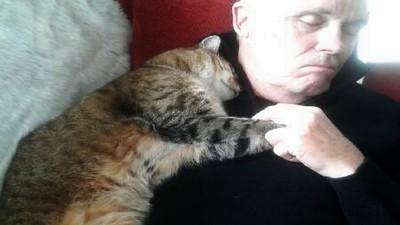 老爸手術回家倒睡沙發 一旁貓咪牽手翻肚陪睡...但我們家沒養貓呀!