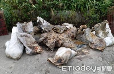 八里區驚見30袋腐爛雞屍!動保處送驗