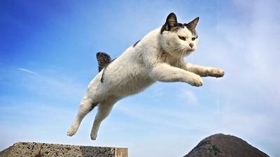 吸貓成癮者來「日本貓島」加強症狀! 輕旅行還有兔子狐狸來陪你