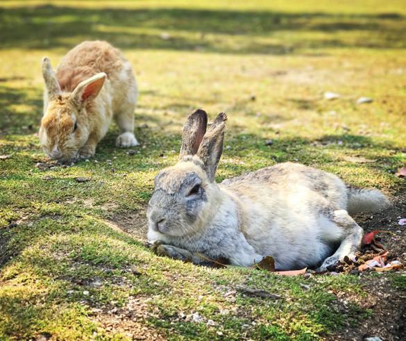 ▲▼兔子。(圖/悅知文化提供)
