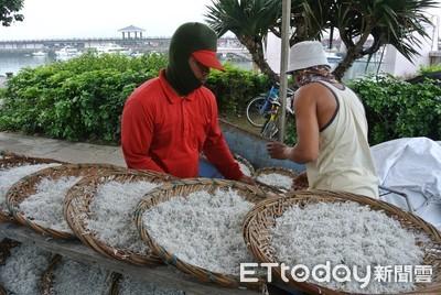 新北每船10萬收購魩鱙漁業經營權