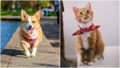 你是狗派還是貓派? 研究顯示:狗主人比貓主人「幸福感」高兩倍