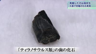 校外教學挖琥珀 他挖出9000萬年前化石