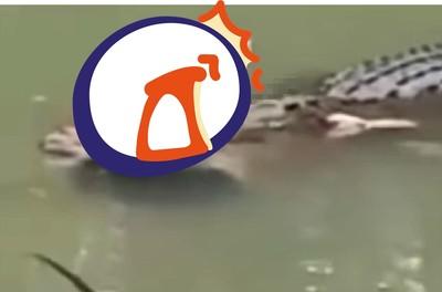 鱷魚口中叼人腿 遺體救出竟完好