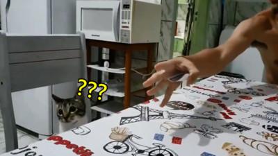 你剛丟的卡片呢!奴才變完卡牌魔術笑到歪腰,貓貓一臉驚恐問號