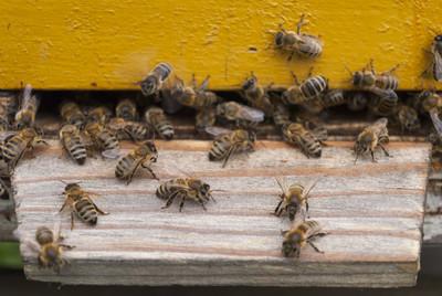 他驚悚目睹 愛車遭4萬蜜蜂覆蓋