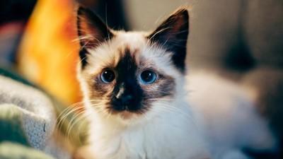輕鬆就能上手!超簡單「貓咪健康按握術」 每天按讓貓主子更健康