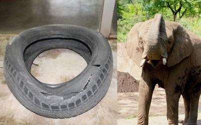 日本動物園舉辦活動 祭出「神秘獎品」...駱駝的毛、大象玩過的輪胎