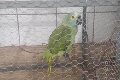 媽咪~警察! 鸚鵡幫主人把風進警局