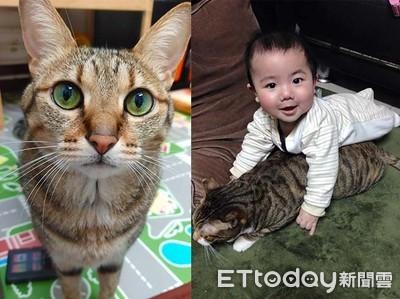 女友要求送養貓 霸氣男秒放生被讚爆
