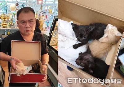 幼貓裝箱遭棄 靠狗狗撿回一命