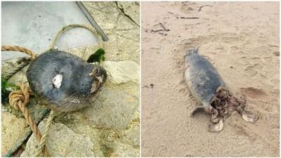 法國海豹接連被分屍 因仇而濫殺