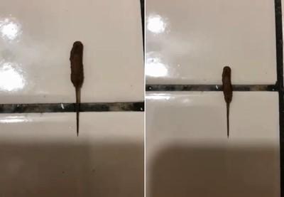 桃園「10cm黑血香腸」甩長尾狂爬!她嚇哭