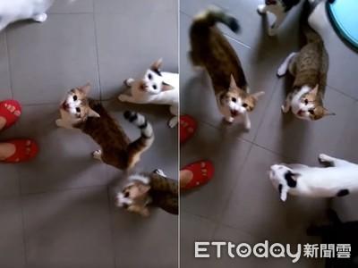 被推坑貓不吵 她養8隻後悔莫及