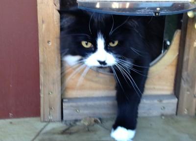 她蓋室外貓屋 愛貓每天出走100次