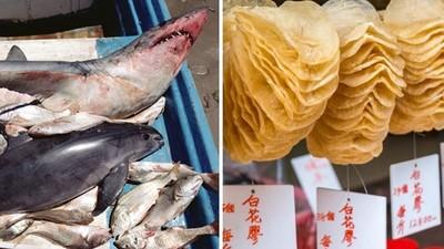 被人類吃到絕種!流刺網濫捕「鼠海豚」魚屍取煉花膠,貴婦掏錢搶買