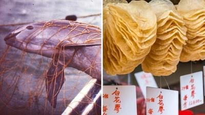 被人類吃到絕種!「鼠海豚」受困流刺網窒息 魚屍取煉花膠,貴婦搶買