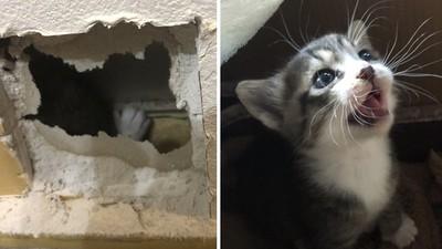 牆壁裡傳來小貓哭叫!求救聲越來越弱...他「砸破自己家」果斷救援