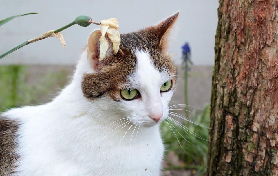 ▲▼貓咪。(示意圖/取自免費圖庫Pixabay)