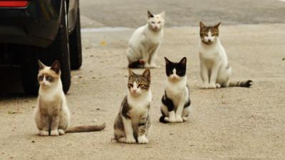 家貓走失拜託野貓傳話「請牠早點回家」 日本網友試完驚呼:真的有效