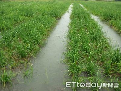 受丹娜絲颱風波及...全台農損破千萬