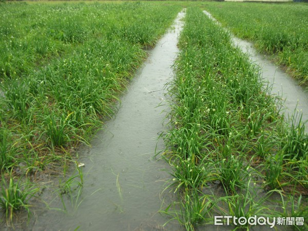 豪雨農損1644萬!屏東最嚴重…356公頃一期水稻全毀