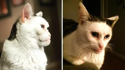 主人嫌牠醜!「猴臉貓」出生兩天被丟棄 如今成了網路明星