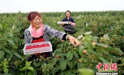 農業大省黑龍江發展外向型農業