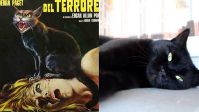152隻黑貓出動!60年代美國恐怖片試鏡大會 表情越卑鄙越容易被選中