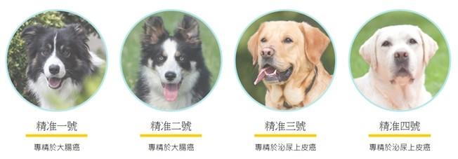 ▲▼狗狗。(圖/精準嗅癌犬授權提供,請勿隨意翻拍,以免侵權。)