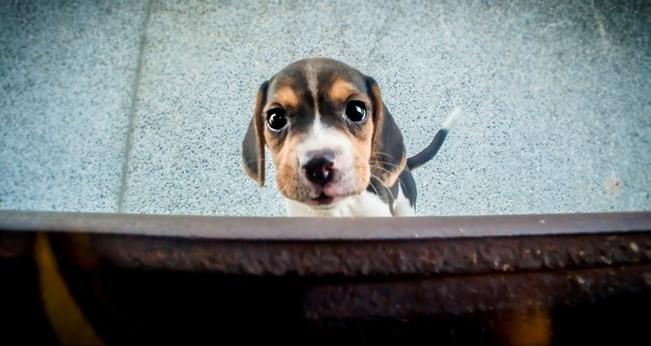 ▲▼狗狗。(示意圖/Hans Liu@Flickr授權提供,請勿隨意翻拍,以免侵權。)