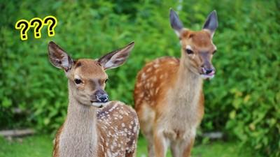 用英文來說笑話!一個「沒有眼睛的鹿叫什麼?」 答案是:No idea