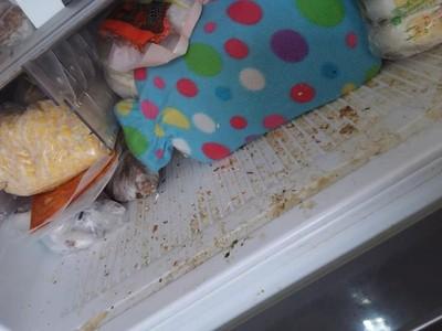 剩菜煮點心加料蟑螂腳 超噁幼兒園