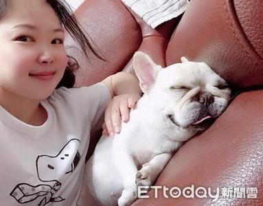 短鼻狗「饅頭」媽媽找了3年 終於買到理想的寵物險