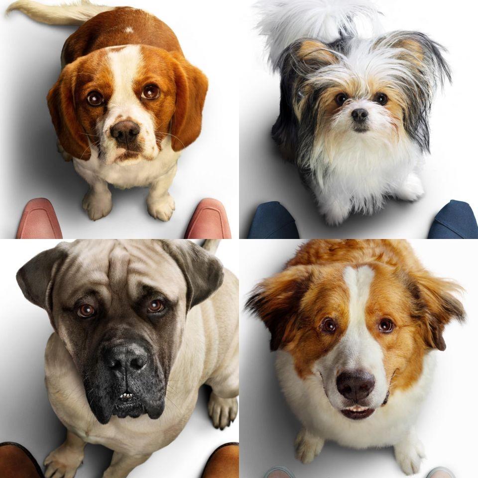 ▲《狗狗的旅程》。(圖/UIP提供)