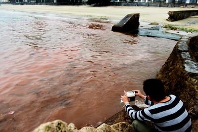 海水整片變紅色 292隻海龜集體死亡