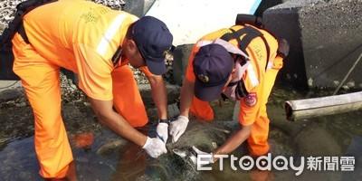 綠蠵龜渔網纏身 海巡人員救援