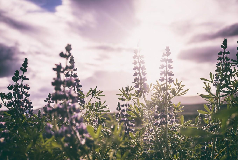 ▲▼《曬冰島 UNLOCK ICELAND:住在冰島才知道的70個迷人小事、小店、小旅行》。(圖/時報出版提供)